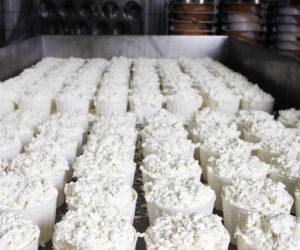 Trasformazione del Latte in formaggio